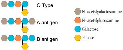 ABO-antigen